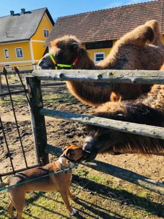 Pauli, Karmacs lebt jetzt glücklich in Österreich Img-2544