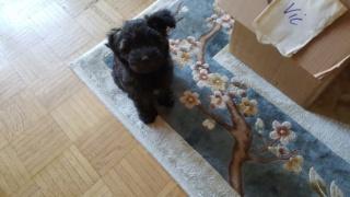 Trixie (von Joya) PS Tan lebt jetzt glücklich in Österreich Img-2555