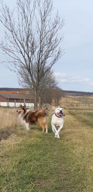 Wiona, Karmacs lebt jetzt glücklich in Österreich Img-2615