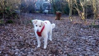 Obelix, Karmacs lebt jetzt glücklich in Deutschland Img-2634
