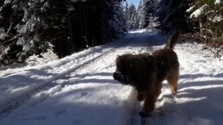 Athos, Bogancs lebt jetzt glücklich in Österreich Img-2685