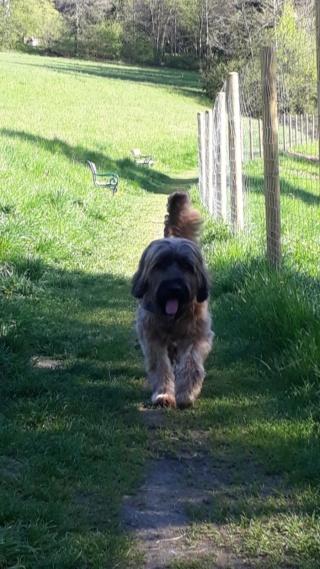 Athos, Bogancs lebt jetzt glücklich in Österreich Img-2914