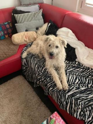 Loretta, Monor lebt jetzt glücklich in der Schweiz Img-2937
