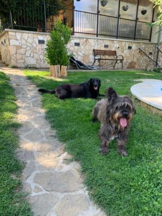 Nicky lebt glücklich in Österreich und Zeno von Andrea Img-3023