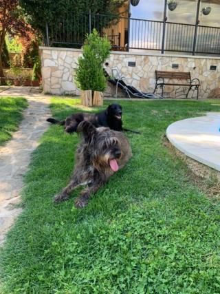 Nicky lebt glücklich in Österreich und Zeno von Andrea Img-3026