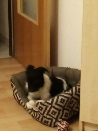 Snoopy/Arkan Karmacs lebt glücklich in Ungarn Img-3824