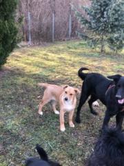 Ella Karmacs lebt glücklich in Deutschland Img_0235