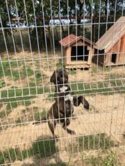 Jill, Karmacs lebt jetzt glücklich in Österreich Img_0411