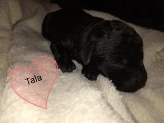 Tala (von Joya) PS Tan  Img_2128