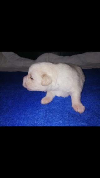 Peppino P-Baby von Peggy Karmacs lebt glücklich in Deutschland Img_2760
