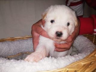 Peppino P-Baby von Peggy Karmacs lebt glücklich in Deutschland Img_3712