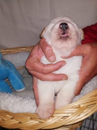 Peppino P-Baby von Peggy Karmacs lebt glücklich in Deutschland Img_3714