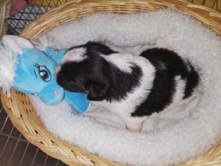 Pia P-Baby Peggy Karmacs lebt glücklich in Deutschland Img_3768
