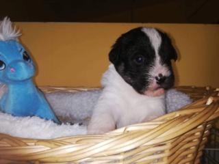 Pia P-Baby Peggy Karmacs lebt glücklich in Deutschland Img_3770