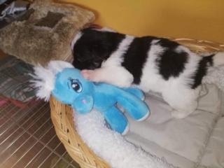 Pia P-Baby Peggy Karmacs lebt glücklich in Deutschland Img_3771