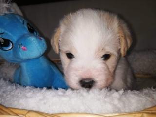Peppino P-Baby von Peggy Karmacs lebt glücklich in Deutschland Img_3773