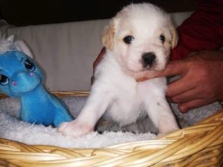 Peppino P-Baby von Peggy Karmacs lebt glücklich in Deutschland Img_3774