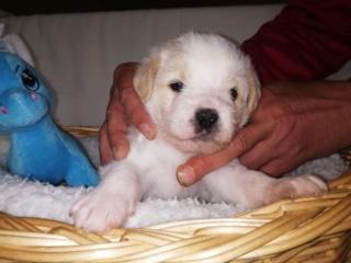 Peppino P-Baby von Peggy Karmacs lebt glücklich in Deutschland Img_3776