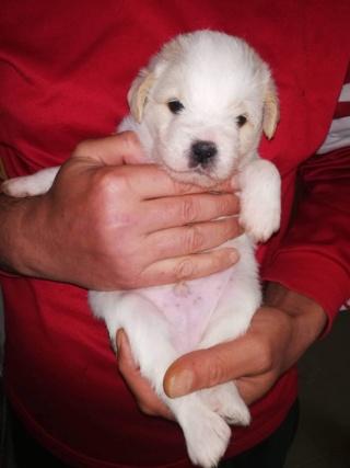 Peppino P-Baby von Peggy Karmacs lebt glücklich in Deutschland Img_3777