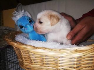 Peppino P-Baby von Peggy Karmacs lebt glücklich in Deutschland Img_3778