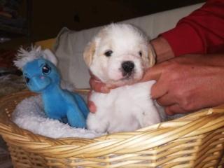 Peppino P-Baby von Peggy Karmacs lebt glücklich in Deutschland Img_3779