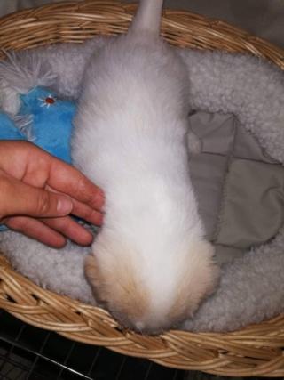 Peppino P-Baby von Peggy Karmacs lebt glücklich in Deutschland Img_3780