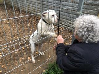 Wiona, Karmacs lebt jetzt glücklich in Österreich Img_4012