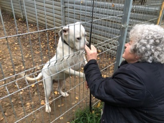 Wiona, Karmacs lebt jetzt glücklich in Österreich Img_4013