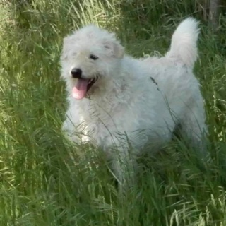 Kocos, Monor verstorben im Juli 2019 RIP kleiner Mann Img_4015