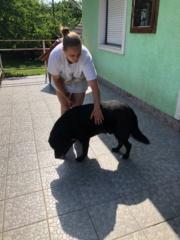 Kormi Karmacs lebt glücklich in Österreich Img_5111