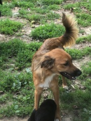 Loki, (Z-Welpe) Karmacs lebt jetzt glücklich in Österreich Img_6925