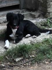 Loki, (Z-Welpe) Karmacs lebt jetzt glücklich in Österreich Img_7015