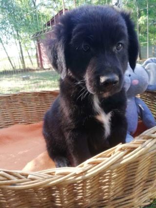 ZULU, (Z Baby) Karmacs lebt jetzt glücklich in Österreich! Img_8810