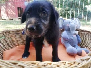Zino (Z-Baby), Karmacs lebt jetzt glücklich in Österreich Img_8820