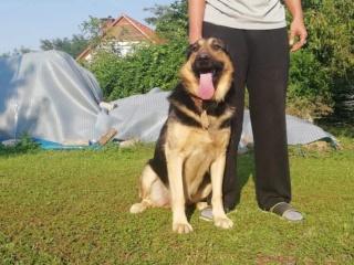 Ubul, Karmacs lebt glücklich in Deutschland Img_9033