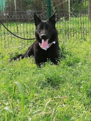 Nero/Sam Karmacs lebt glücklich in Österreich Img_9153