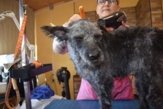 Manka Monor lebt glücklich in der Schweiz Kepat160