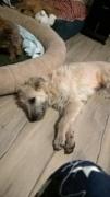 Loretta, Monor lebt jetzt glücklich in der Schweiz Kepat276