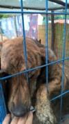 Katica, Schäferhund-Windhund-Mischlingshündin, geb. ca. Mai 2017 Kepatm18