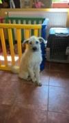 Loretta, Monor lebt jetzt glücklich in der Schweiz Kepatm43