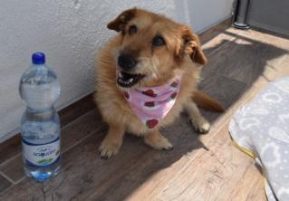 Panni Monor lebt glücklich in Deutschland P411