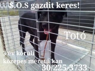 Pascal, Monor lebt glücklich in Deutschland Toto10