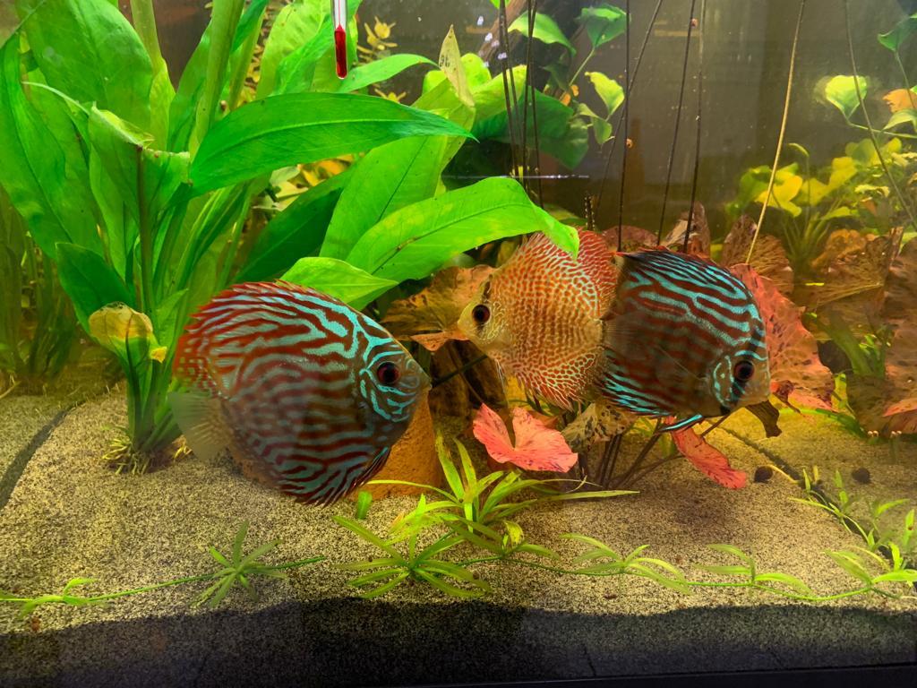 KH GH pour aquarium à Discus Ff8dc210