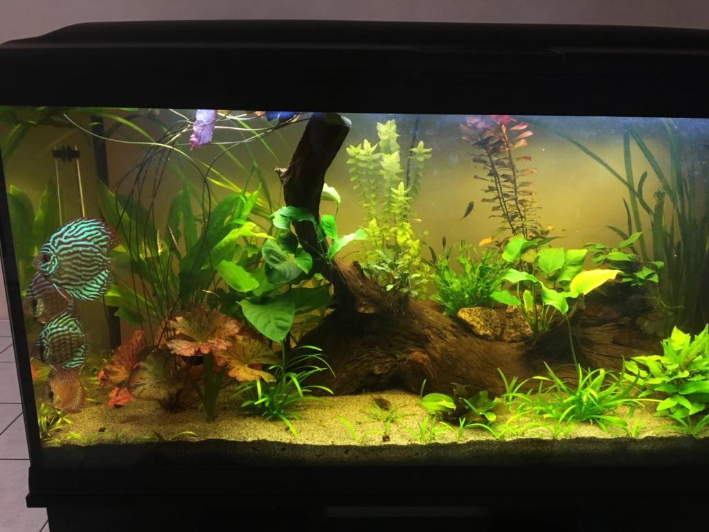 KH GH pour aquarium à Discus Img_6910