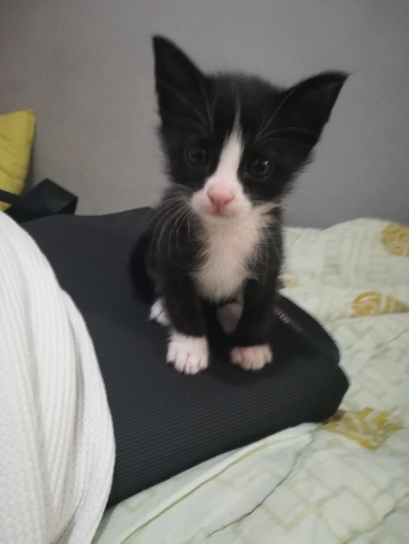 Νεογέννητο γατακι - Σελίδα 5 Img_2013