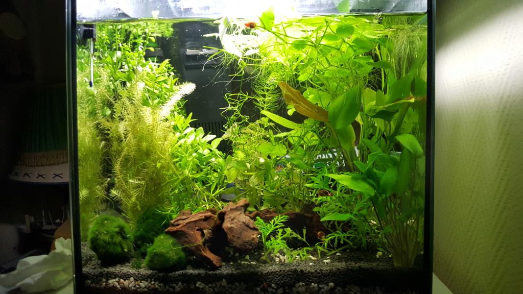 Nouveau aquarium et AquaBasis de JBL 20190510