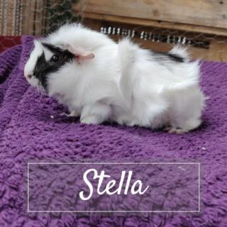 CRACOTTE & STELLA Copie_16