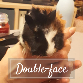 DOUBLE-FACE Photo_16