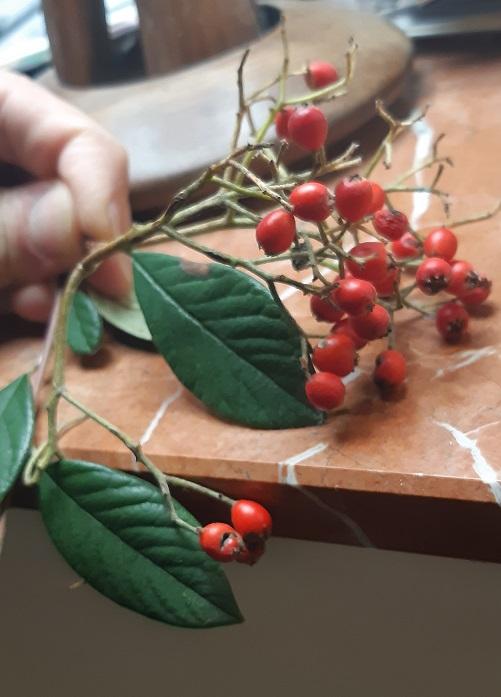 [Atelier plantes sauvages] Exercice : Découvrir et cuisiner une plante sauvage  - Page 5 20200310