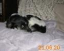 POPPY (ex RONNA) - femelle, de petite taille - née environ mai 2018 - REMEMBER ME LAND - Adoptée par Hélène (01)  - Page 3 2020-078
